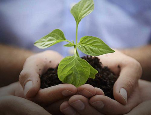 Il nostro impegno per l'ambiente